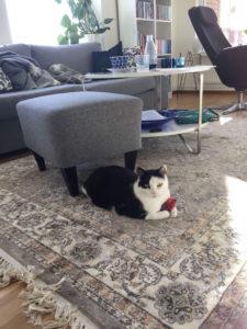 Svart och vit katt med en röd leksaksmus på mönstrad matta