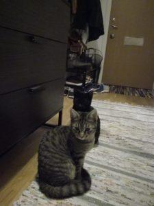 En grårandig och en svart katt som sitter på ljusgrå matta i en hall